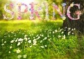 """Spring"" (Tree & Flowers)"